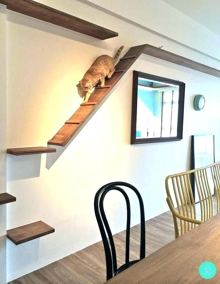 Image Result For Cat Walkways In House Cat Wall Shelves Cat House Diy Cat Walkway