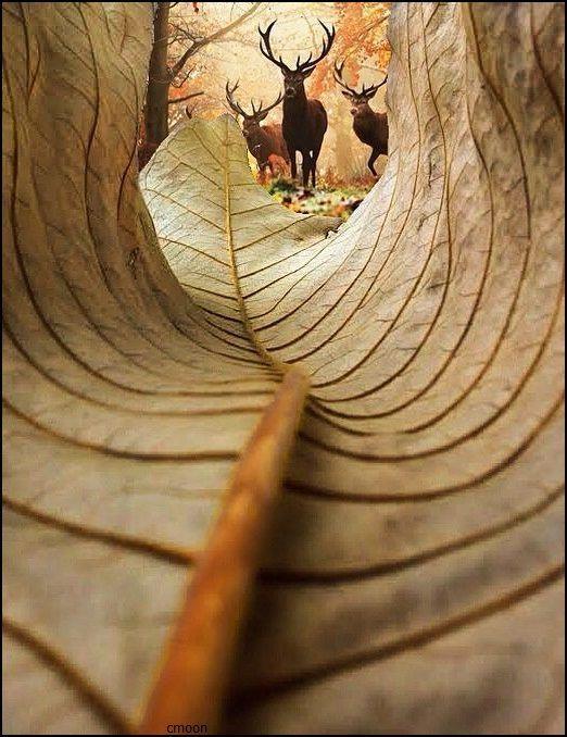 dabonbb:  枯れ葉の世界観【Pinterest】   #秋 #art #シカ #鹿 #枯れ葉おぉ...いいアングルですねぇ。早く秋が来て欲しいです。いつまでも暑いし...