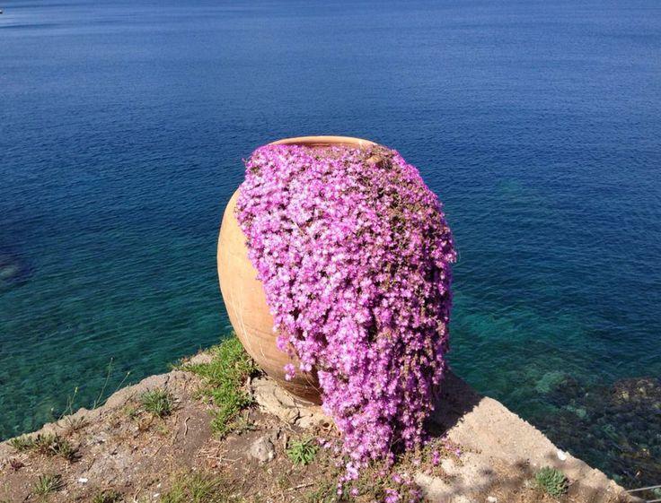 #carascohotel #deepblue #blue #sea #lipari #aeolianislands #purple #flowers