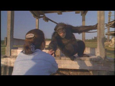 Woman Reunites With Two Laboratory Chimpanzees She Helped Free http://po.st/XDRiLS via @Reshareworthy