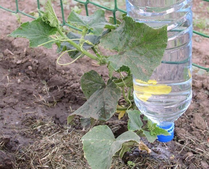 Что такое капельное орошение. Это дозированный способ полива, который осуществляется непосредственно под корень растения. Благодаря такому орошению корневая система получает необходимое количество вла...