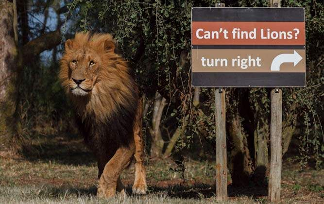 Funny Africa Signs ViralBru (1)