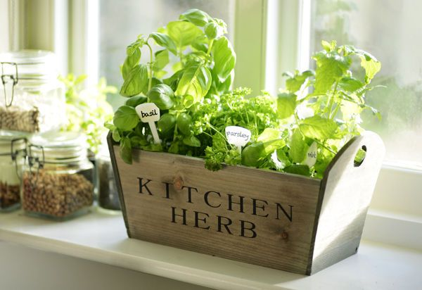 Kitchen garden herb window sill box planter seeds wooden Kitchen windowsill herb pots