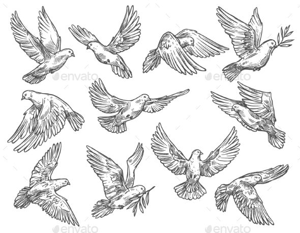 Pigeon Flying With Olive Branch Vector Sketch Dove Tattoos