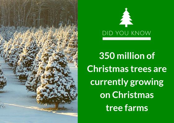 And guess how long does it take to grow a Christmas tree ...
