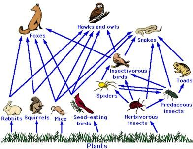 Life on the Prairie! Create a prairie food web and learn all about producers and consumers!