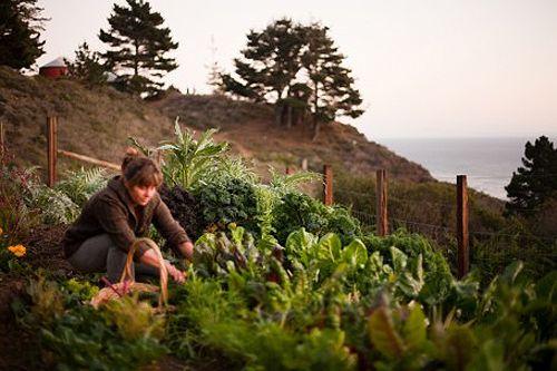 : Modern Gardens, Design Gardens, Gardens Decor, Dreams, Gardens Design Ideas, Country Living, Country Life, Beautiful Gardens, Gardens Interiors
