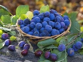 Plums: Shared Photo, Local Farms, Bookmarks, Fruit Wallpapers, Blue Berries, Color, Blog, Blueberries, Fruit Photo