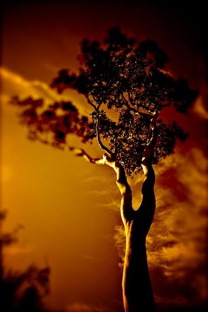 tree on fire by bermuda fluff, via Flickr