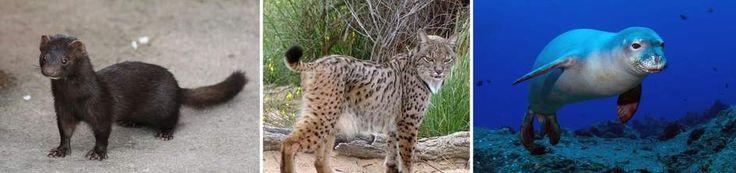 El número de animales en peligro crítico de extinción va en aumento en España  Ver más en: http://www.20minutos.es/noticia/2298207/0/lista-roja/peligro-critico-extincion/animales-espana/#xtor=AD-15&xts=467263