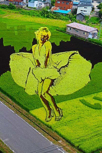 【花魁とハリウッドスター】 田舎館村田んぼアート2013 | じゅずじの旦那 Aomori