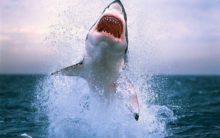варианты, картинка акула бесите это город котором