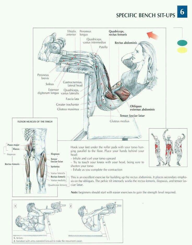 Anatomía del ejercicio. www.rubenentrenador.com Personal trainer Madrid Valencia