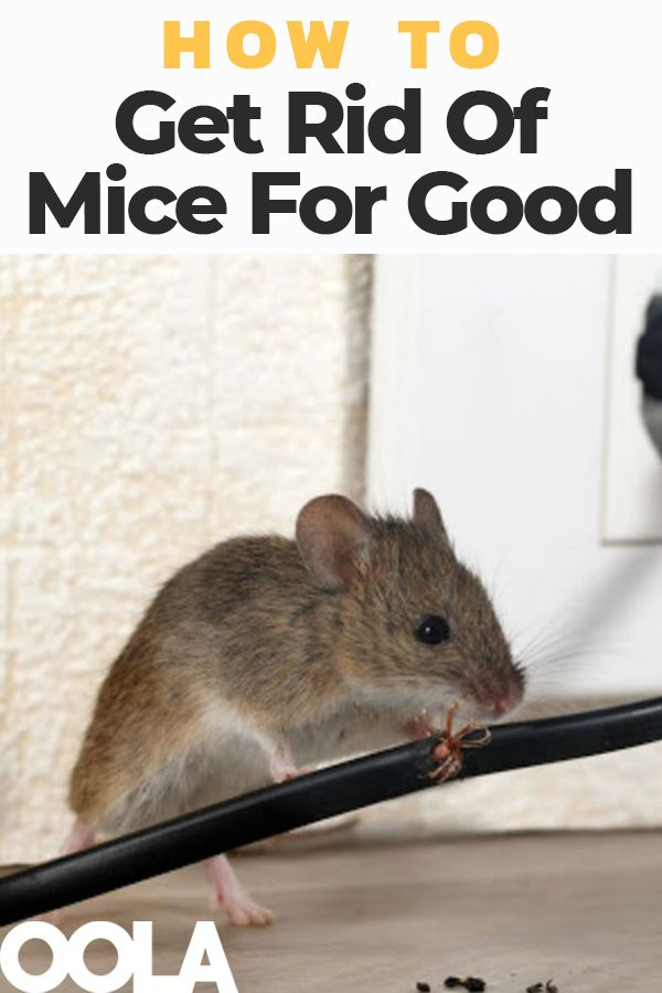How To Get Rid Of Mice For Good Getting Rid Of Mice Mice Repellent How To Deter Mice