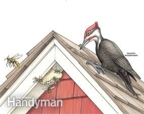 Woodpeckers are lovely creatures but they can wreak havoc on your structures. Here's some tips on keeping them away.