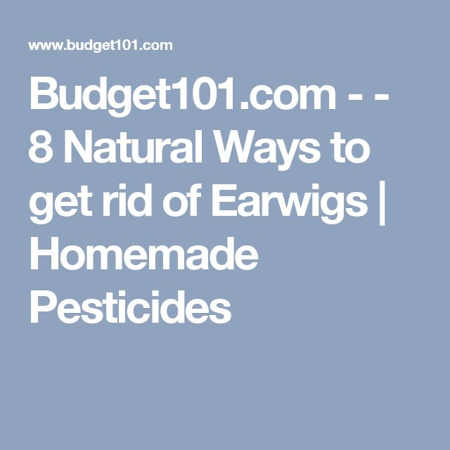 10 Best Ideas About Earwig Control On Pinterest Gardening Companion Planting And Tomato Garden