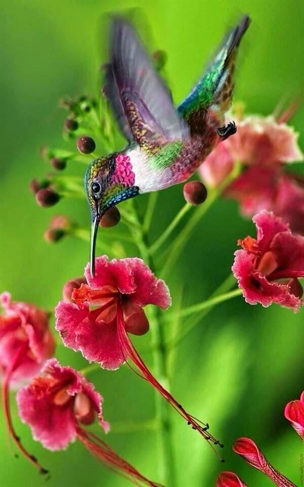Hummingbird. Humming Along...
