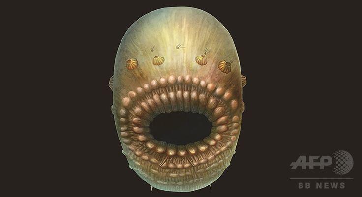 約5億4000万年前に生息していた袋状の海生生物「サッコリタス」の復元画像(2017年1月30日提供)。(c)AFP/NATURE PUBLISHING GROUP/JIAN HAN ▼31Jan2017AFP|人類最古の祖先、5億4000万年前の肛門のない袋状生物か 研究 http://www.afpbb.com/articles/-/3116022 #Saccorhytus