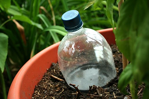"Drip irrigation reuse for Container Gardening:  reuse a plastic bottle! ""Leaving the bottle right-side-up and and poking the small hole(s) in the bottom of the 2 liter bottle, because then I can screw the cap back on and keep bugs, like mosquitoes, and garden debris out of the water reservoir"""