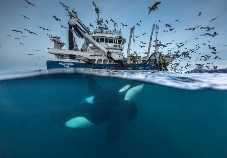 2016 wildlife photographer of the year finalists - in pictures