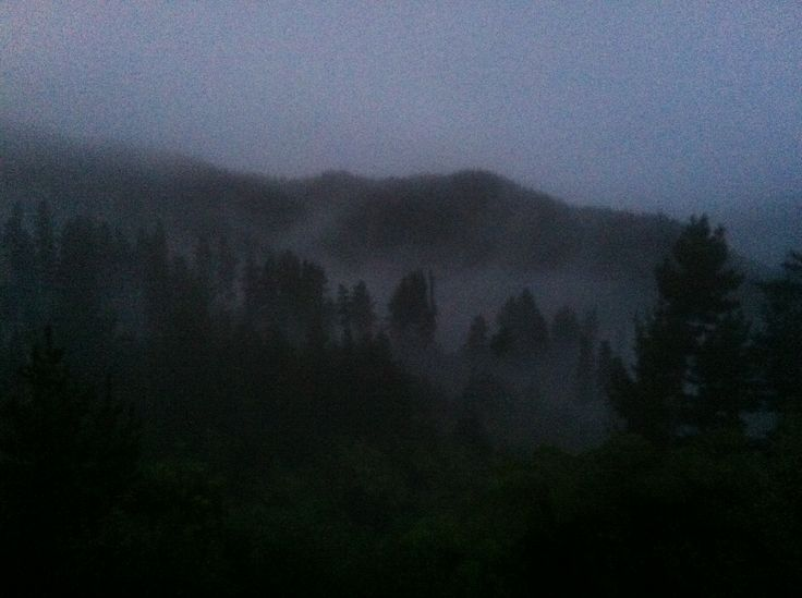 Early morning and waiting for daylight to start work. Waimarino forest. New Zealand. Bit blurry :)