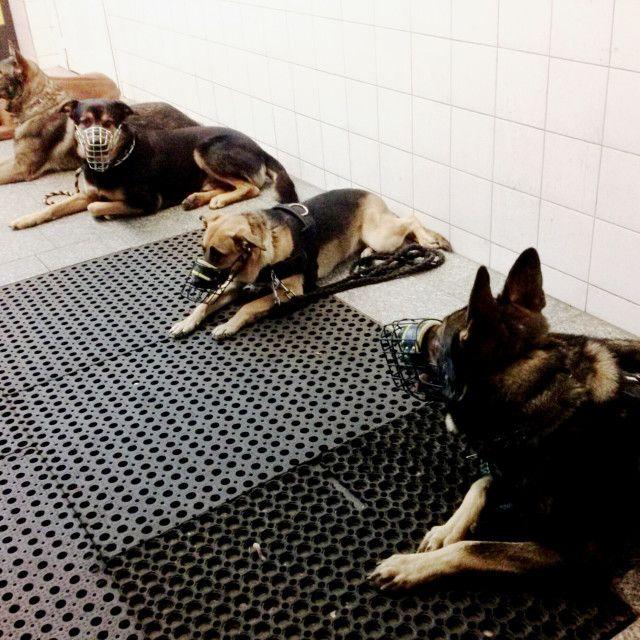 'Dogs on a break' on Picfair.com