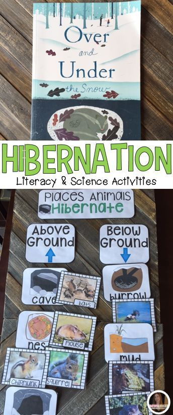 Hibernation, Migration and Adaptation Science and Literacy Centersare great hands-on activities for you busy students. Students will love real hibernation pictures, large and small group activities, independent activities and interactive writing activities.