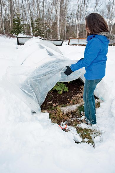 Gardening in the snow. Halifax gardener Niki Jabbour checks on her mini hoop tunnel that lets her grow veggies all winter long. Sheets of plastic let the sun shine in while protecting tender shoots from snow, wind and temperature dips. Photo by Joseph De Sciose