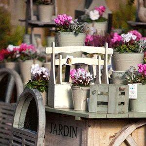 Desearía recomendación p/ árbol pequeño con floración y pleno sol | Plantas & Jardín