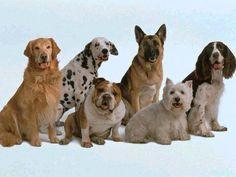 ¿Buscas nombres de mascotas? ¡Aquí tienes 1.000 ideas!