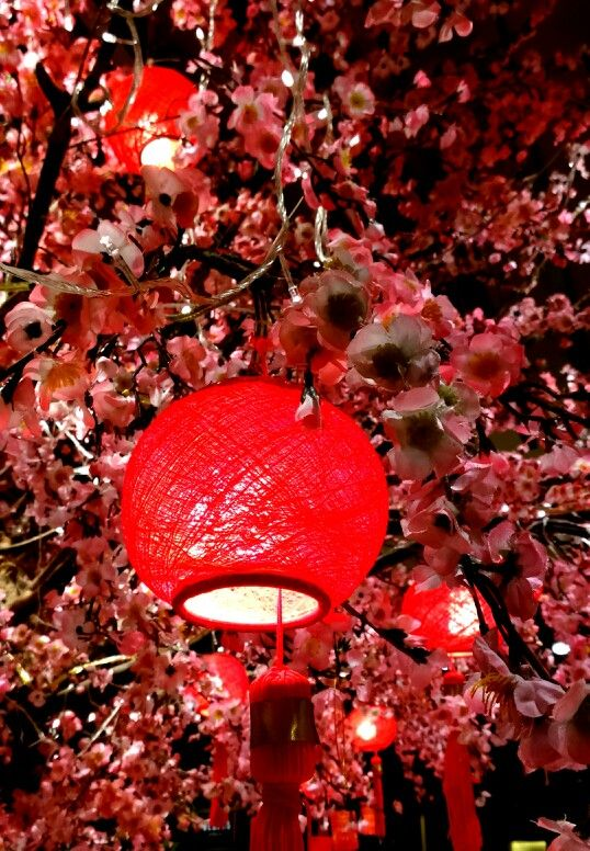 Lampion tree, Gong Xi Fat Cay, Happy Lunar Year...