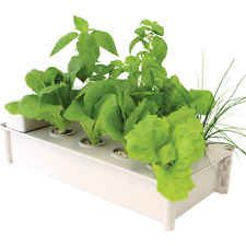 GP0300 - Salad Green Grower - Hydroponic - Moss Products