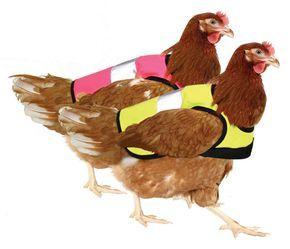Nicht nur für Sicherheit im Straßenverkehr. Die Weste hält die Hennen schön warm und den Hahn davon ab, sie zu besteigen! #Omlet #Warnweste #Hühnersattel