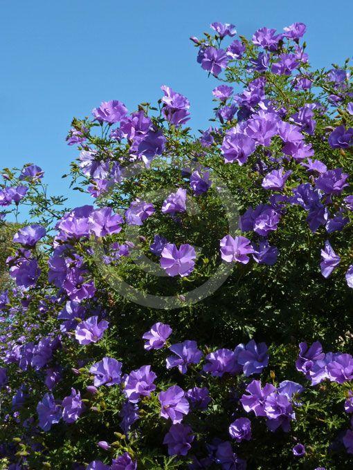 Sun Flower Garden Ideas