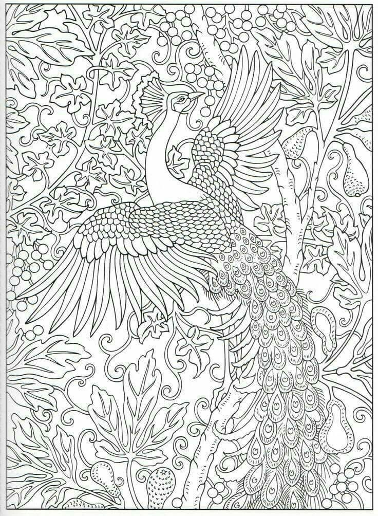 ne e balci adl kullan c n n birds panosundaki pin pinterest colouring pages peacock. Black Bedroom Furniture Sets. Home Design Ideas