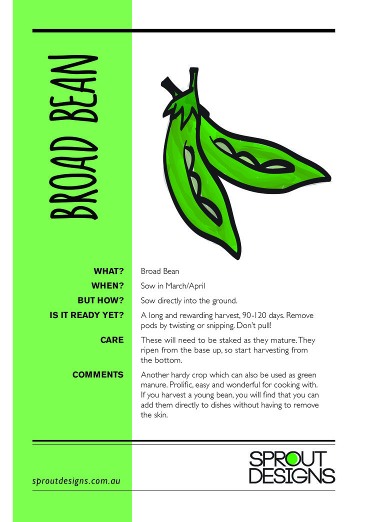 How to grow Broad Beans!