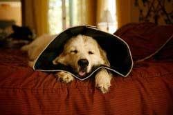 All Four Paws Comfy Cone Large   Dog   Pet Supermarket