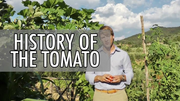 The History of the Tomato in 2 Minutes | Walks of Italy