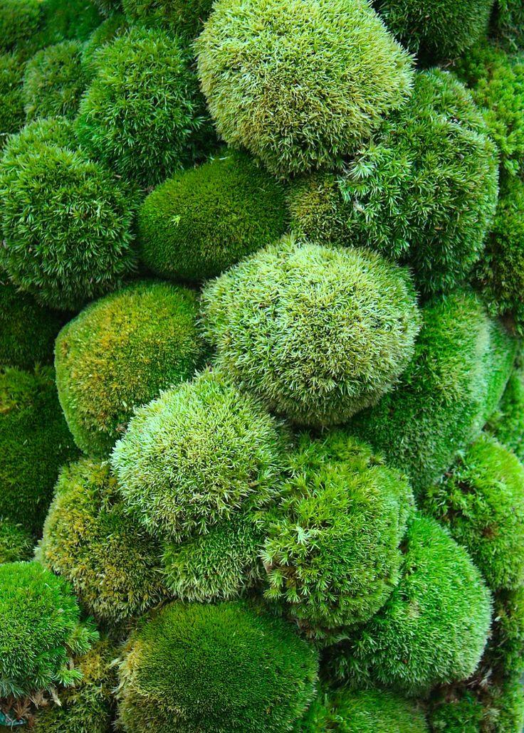 Best 25+ Moss Garden Ideas On Pinterest