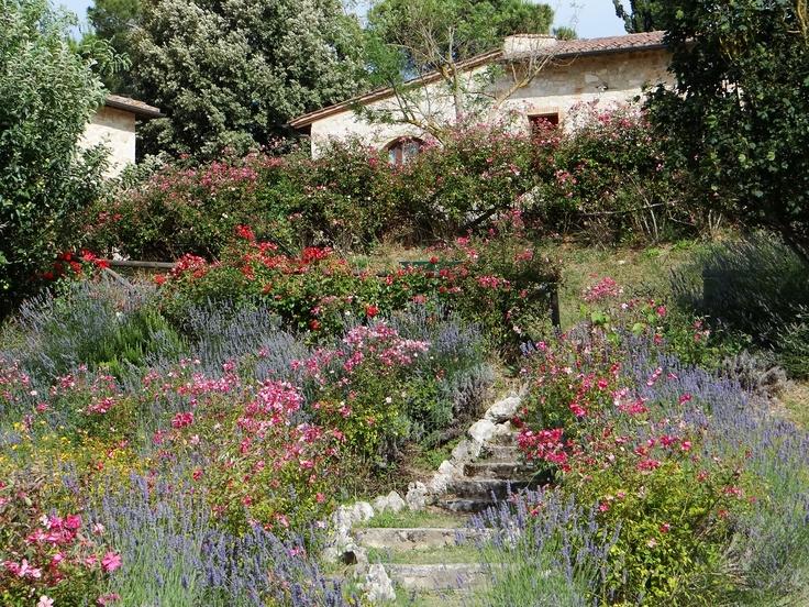 I giardini in fiori dell'agriturismo romantico Taverna di Bibbiano: set fotografico naturale per le vostre fotografie da innamorati..