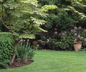 Got lawn patches in need of fixing? Better Homes and Gardens has a lawn repair recipe, including what you'll need and a step-by-step tutorial.