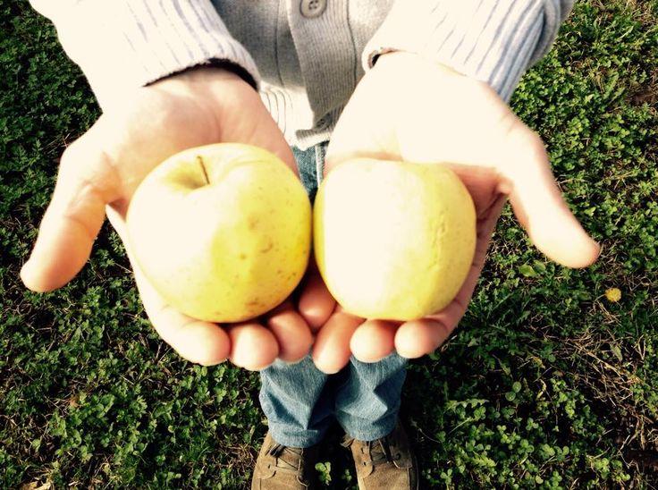 Conosciamo insieme e diamo valore all'agricoltura sostenibile nel Parco Ticino