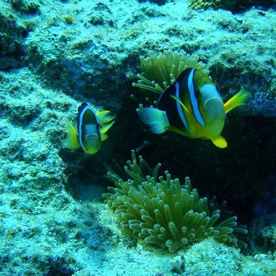pretty#オーストラリア#グレートバリアリーフ#沖縄#ケアンズ#australia#greatbarrierreef#cairns#trip#旅#夏#海#ocean#blue#青#pretty#swim#beach#scubadiving#inthesea#旅#boat#水中#swim#船#熱帯魚#fish#観光#view#trip#旅#アクティビティ#珊瑚#世界遺産#worldheritage by dolphinblueocean http://ift.tt/1UokkV2
