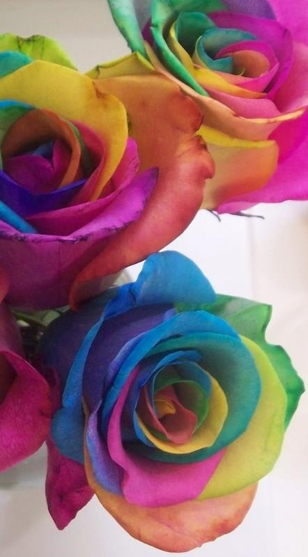 17 best images about rainbow roses on pinterest wedding for Food coloring roses