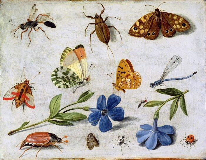 Jan van Kessel; 1626-1679