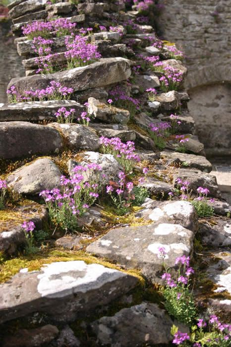 Rock Wall Garden Designs rock wall garden ideas pics Heather Plants That Grow In Crevices