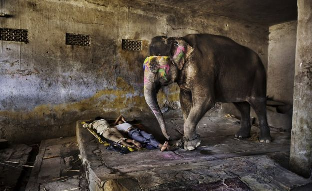 Rajasthan 2012...The slavery of man to poverty...the slavery of animal to serve...Steve Mc Curry