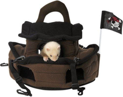 10 Reasons to Consider Ferrets asPets - Small Pet   Pet Care Corner by PetSolutions - PetSolutions Blog
