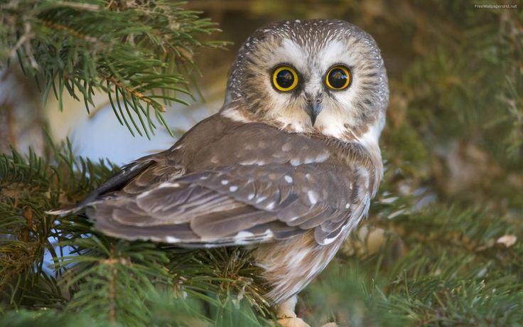 Elf Owl Facts For Kids – Kids Matttroy