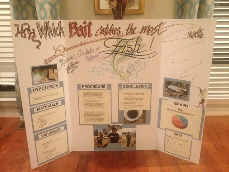 science project that got 2nd place in the middle school On fishing science fair projects